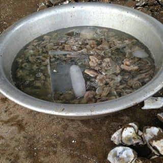 Hàu sữa sống của daidai43 tại 137 Nguyễn Đình Chiểu, 2, tp. Bến Tre, Bến Tre, Thành Phố Bến Tre, Bến Tre - 4445237