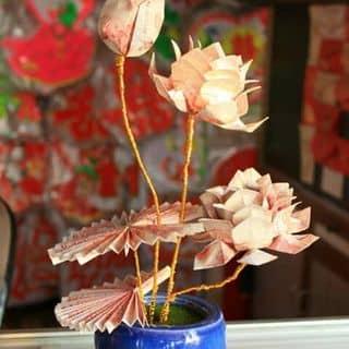 Hoa của acquymau tại Phú Yên - 1955258