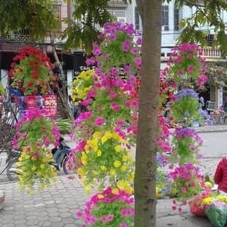 Hoa của luongtiem tại Yên Bái - 2308404