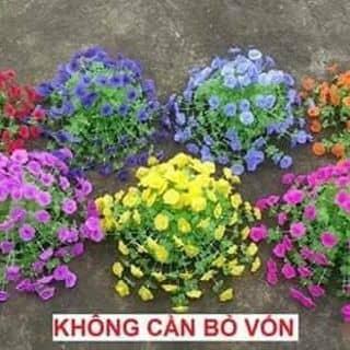 Hoa của ngoc399 tại Nam Định - 2386143