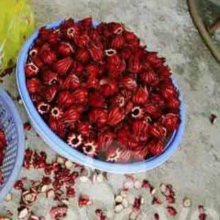 Hoa Atiso Ngâm Đường NuHaWa của trinh1631 tại Hà Giang - 1540638