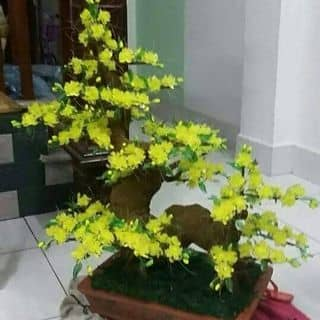 Hoa da pha le của thuypham156 tại Chợ Hạ Long 2, Thành Phố Hạ Long, Quảng Ninh - 1816841
