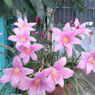 Hoa đẹp giấy đây ak của caobactran tại 2 Phan Đình Phùng, Thành Phố Hà Tĩnh, Hà Tĩnh - 1905067