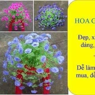 Hoa giay lua của ankssons tại Phú Thọ - 2068132