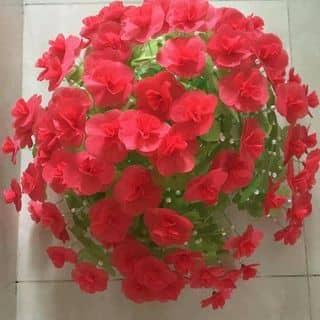 Hoa giấy lụa của nguyenngocanh1907 tại Vĩnh Long - 2490799