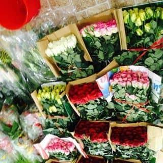 Hoa Hồng đủ sắc 🌹😍 của phamdi7 tại Trần Đại Nghĩa, Phường 4, Thành Phố Vĩnh Long, Vĩnh Long - 2765643
