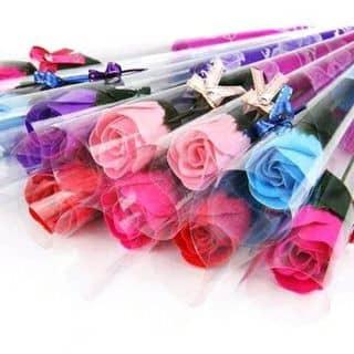 Hoa hồng sáp của haykhocbecon tại Quảng Ninh - 2724364