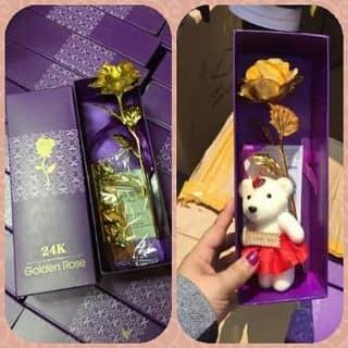 Hoa hồng vàng của nqannqan7 tại Quốc lộ 1A,  Hộ Phòng, Huyện Giá Rai, Bạc Liêu - 1134250