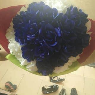 Hoa hồng xanh của phanhue14 tại Quảng Bình - 1408630