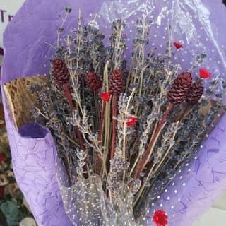 Hoa Lavender khô của linhntn02 tại Bà Rịa - Vũng Tàu - 2844524