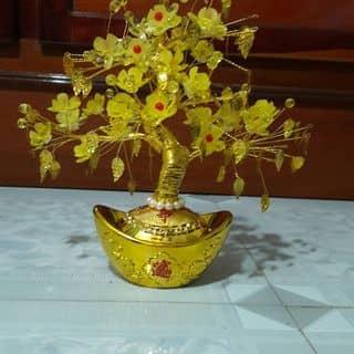 Hoa mai lá ngọc của ityhoa tại Đồng Tháp - 1899698