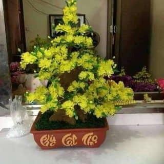 Hoa mai nhe của thuypham156 tại Chợ Hạ Long 2, Thành Phố Hạ Long, Quảng Ninh - 1607426