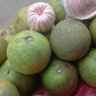 Hoa quả của baohannhung tại 146 Đại Lộ Nguyễn Thái Học, Thành Phố Yên Bái, Yên Bái - 1539678