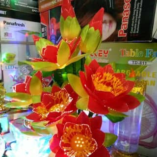 Hoa sen Co den của yeuviemyeuviai tại Hồ Chí Minh - 2461210