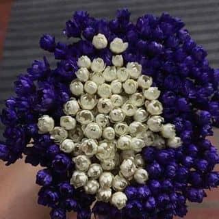 Hoa tuyết của nhithuong tại Hải Dương - 856731