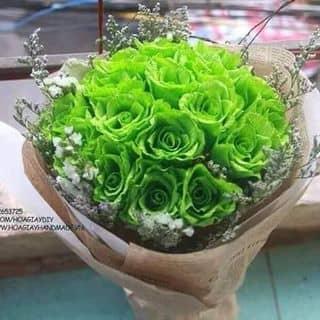 Hoa Vĩnh Cữu của nhimlenka tại Đà Nẵng - 796998