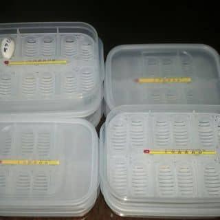 hộp ấp cho bò sát nhỏ của minhthuanhuynh tại Hồ Chí Minh - 2012452