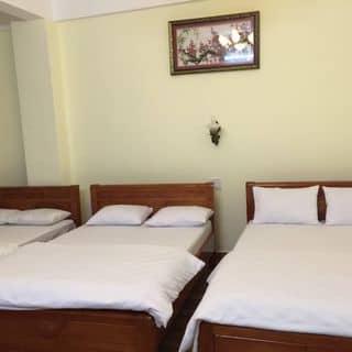 Khách sạn giá rẻ chất lượng như ý của trannghia157 tại Lâm Đồng - 2598485