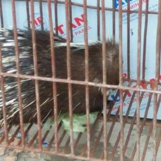 Ko biet nua  của nhathoang82 tại 55 Đường Nguyễn Văn Công, Phường 3, Quận Gò Vấp, Hồ Chí Minh - 2901267