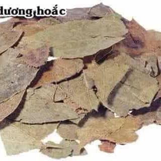 LÁ DÂM DƯƠNG HOẮC của thuha9x tại Thái Nguyên - 1762699