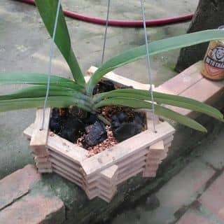 Lan Ngọc điểm của hiepphung2 tại Vĩnh Yên, Thành Phố Vĩnh Yên, Vĩnh Phúc - 1553835