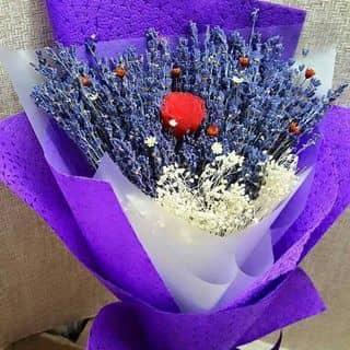Lavender mix hồng bất tử của anngo8 tại Bình Phước - 1829920