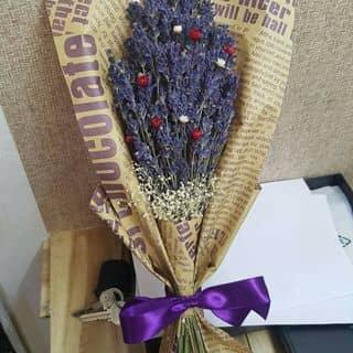 lavender mix snowy và baby của anngo8 tại Ngã 4 Đồng Xoài, Thị Xã Đồng Xoài, Bình Phước - 1268128
