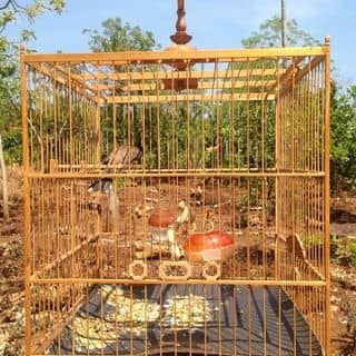 LỒng chim của rombmt tại Đắk Lắk - 2829835