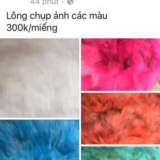 lông chụp ảnh các màu của thuthuy21102016 tại Nam Định - 1461001
