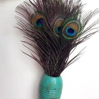 lông đuôi công của sirotrada tại 24 Lê Lợi, Thành Phố Pleiku, Gia Lai - 979250