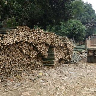Luồng tre của cuonglephi tại Thanh Hóa - 2108197