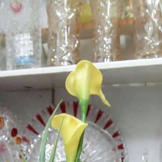 Ly hoa đủ kiểu của tranuyen48 tại Lâm Đồng - 974210