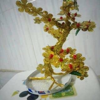 Mai vàng tài lộc của luongbaoni tại 16 Phạm Ngọc Thạch,  P. Vĩnh Thanh, Thành Phố Rạch Giá, Kiên Giang - 2474984