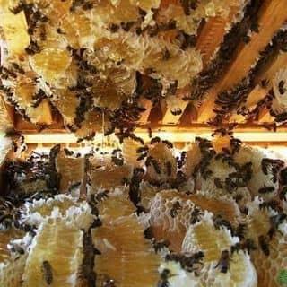 Mật ong daklak của khoanglang1194 tại Hồ Chí Minh - 3307392