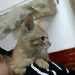 mèo của meomeo1313 tại Thái Nguyên - 2484697