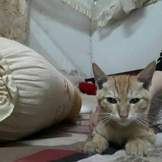 mèo của meomeo1313 tại Thái Nguyên - 2484753