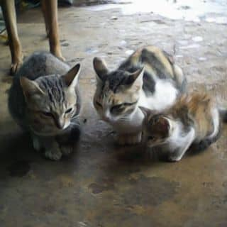 mèo của kensphams1 tại Chợ Đêm Đà Lạt, Thành Phố Đà Lạt, Lâm Đồng - 1159886