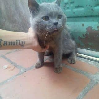 Mèo 34 của hoanggialong tại Shop online, Huyện Thái Thụy, Thái Bình - 1558922