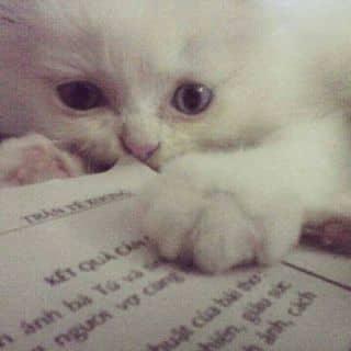 Mèo ald lai 34 của l.l2000 tại Tp. Hoà Bình, Thành Phố Hòa Bình, Hòa Bình - 1429375