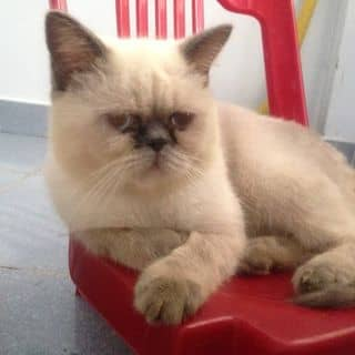 Mèo ALN của thucungtihon.com tại Hồ Chí Minh - 1674597