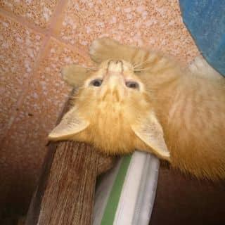 Mèo con 🐱 của tranquangtrong tại Phủ Lý, Thành Phố Phủ Lý, Hà Nam - 1470448