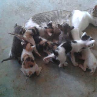 Mèo con của hoanglong472 tại Hồ Chí Minh - 2888117