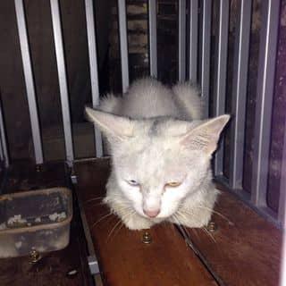Mèo con của latatcadatung tại Hùng Vương, Tiên Cát, Thành Phố Việt Trì, Phú Thọ - 1122929