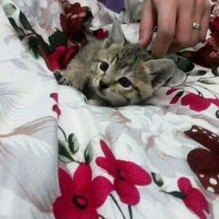 mèo con lon ton của thuymeu tại Shop online, Huyện Vân Đồn, Quảng Ninh - 996901