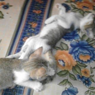 Mèo con xinh của nganscuns tại Mộng Đức,  Phước Hữu, Huyện Ninh Phước, Ninh Thuận - 1991334