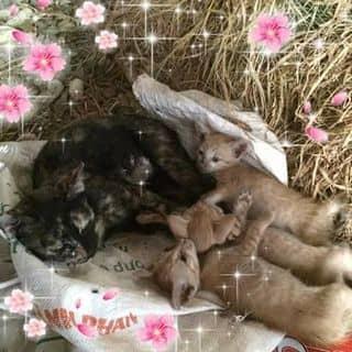 Mèo cưng của thuan971 tại Hưng Yên - 1283377