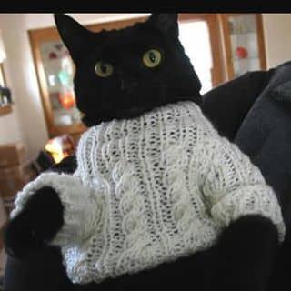 Mèo đen huyền hoại của shinichi10 tại Shop online, Huyện Phú Tân, Cà Mau - 2897820
