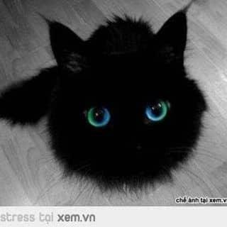 Mèo độc của nguyenda11 tại Shop online, Huyện Thái Thụy, Thái Bình - 2940187