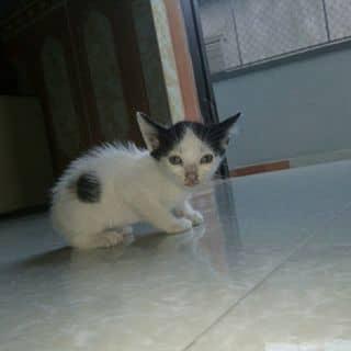 Mèo kool của phamhue42 tại Shop online, Huyện Bình Giang, Hải Dương - 1766606