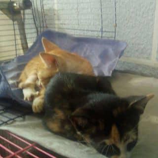 Mèo tặng của vuhac1 tại Hồ Chí Minh - 2080199